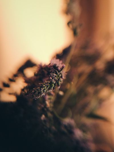 Extreme Close-Up Of Plant During Sunset