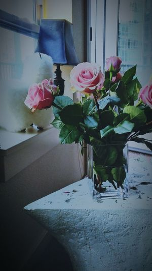 just because Roses Pink Flowers Fucia Blooming Flower Pedals DenverColorado EyeEm Selects Photooftheday Denver Colorado Photography Wintertime Naturephotography Winter Wonderland