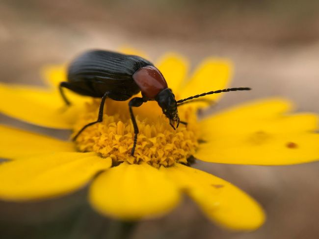 Macroday 😜 iPhone Yellow One Animal Petal Insect Fragility Animal Themes Animals In The Wild Nature Beauty In Nature Freshness Flower Head Plant No People Animal Wildlife Outdoors Close-up Growth Day Pollination
