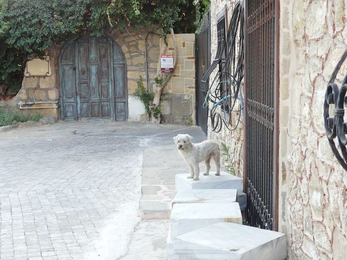 View of a cat looking at entrance of building