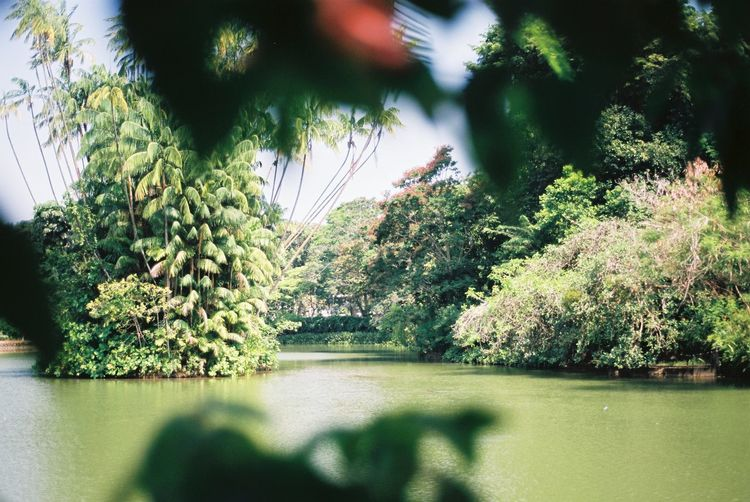Botanical Garden Nature 35mm Film Film Photography Analogue Photography Filmisnotdead Tree Plant Nature Growth Green Color Sunlight Shadow Tranquility Scenics - Nature Tranquil Scene Outdoors Beauty In Nature