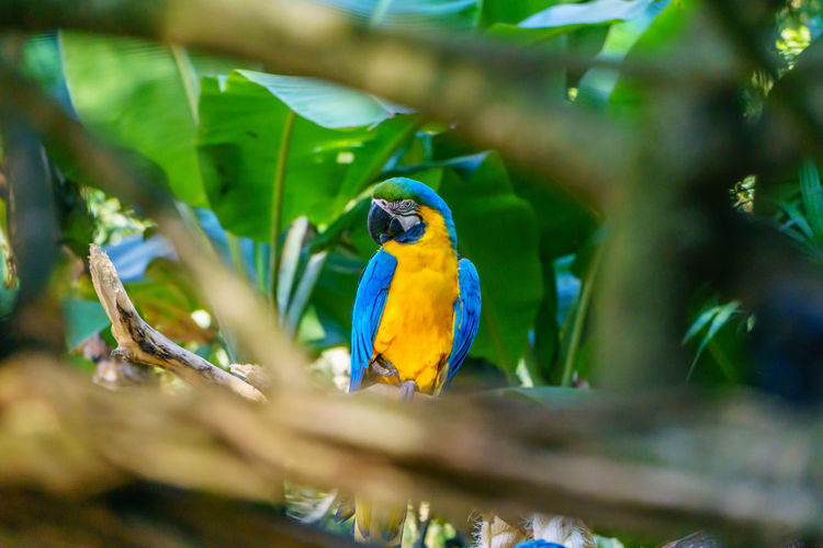 Animal Themes Animal Wildlife Animals In The Wild Beauty In Nature Bird Day Gold And Blue Macaw Macaw Nature No People One Animal Outdoors Parrot Perching Tree Yellow