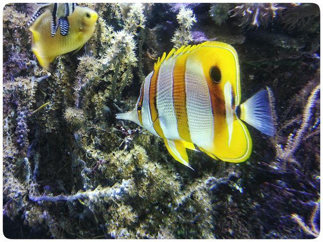 Smartphone Photography Note 2 Through The Window Fish Underwater Animal Themes Acquario Di Genova Fish Tank