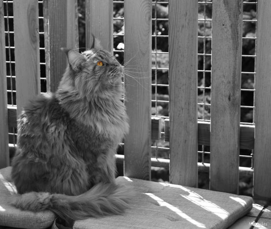 captured moments Balcony Blackandwhite Cats 🐱 Day EyeEmNewHere Housecat Intent No People One Animal Pets Shadowplay