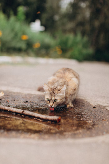 High angle view of cat drinking water from street