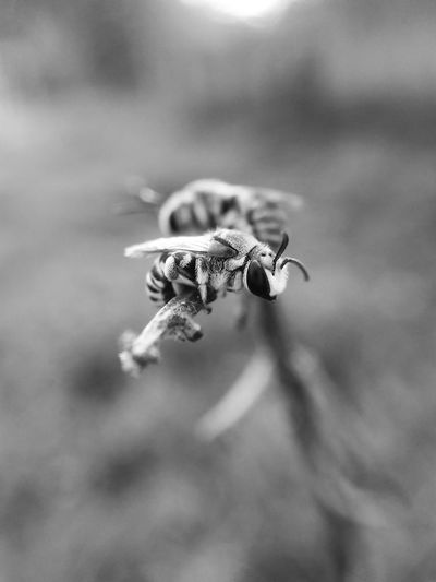 Macro Insect Bees Black And White Nature Close-up Outdoors Mobilephotography Place Of Heart Live For The Story The Great Outdoors - 2017 EyeEm Awards
