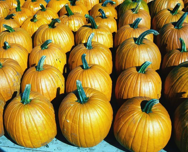 Pumpkins Harvest Time Orange! Ripe Delicious Future Pie Future Jack O Lantern Dried Pumpkin Seeds Pumpkin Soup Colors Of Autumn