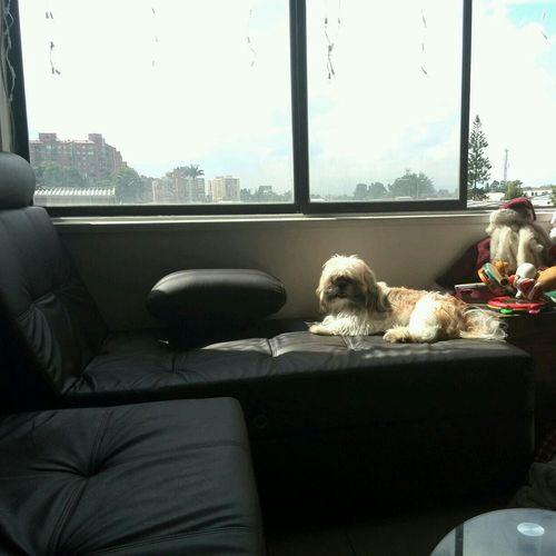 my Dog Taking Sun