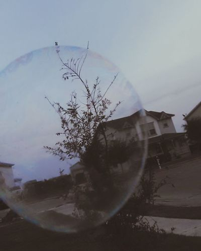 Bubbles Bubblevision Magnified Fun Outside Photography Family Time Rare Beauty