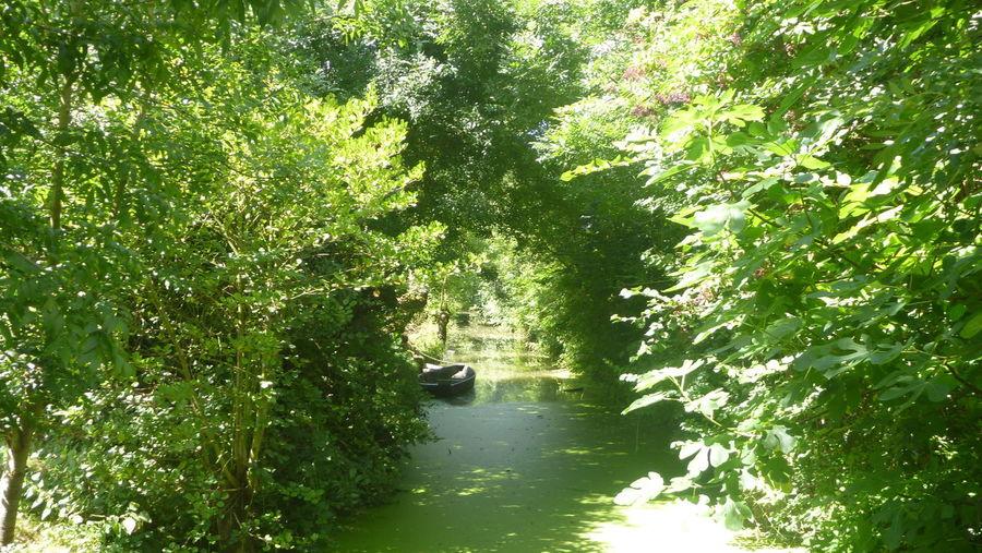 Beauty In Nature Green Color Nature No People Non-urban Scene Outdoors Scenics Tranquil Scene Tree Water Maraispoitevin Veniseverte Abandoned