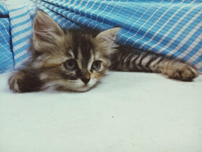 Pastel Power Our Kitty Love ♥ Mypetcat Myphonecaptured EyeEm Animal Lover EyeEm Best Edits HappySunday✌