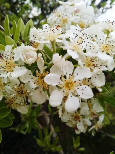 EyeEmNewHere Colorful Flower View Flower Head Flower Springtime Petal White Color Blossom Close-up Plant Plant Life Wildflower