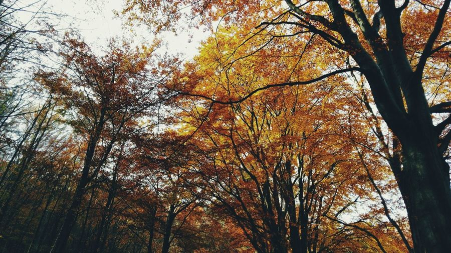 Leaves Autumn Red Outdoors Weathered Day Sky Season  Leaves🌿 Leaves Yellow Nature Season  Tree