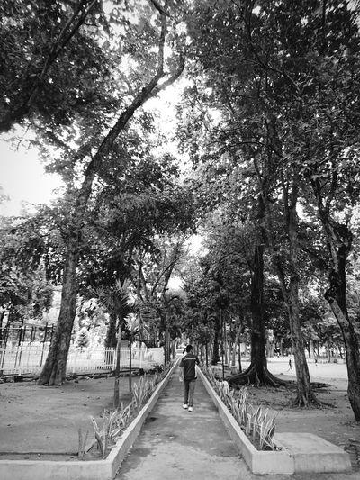 Walking... Tree Walking Growth The Way Forward Green Color Diminishing Perspective Nature Outdoors Long South Cotabato EyeEmBestPics EyeEm Best Edits EyeemPhotos EyeEm Gallery SONYXPERIAX Eyeemphoto Xperia X Streetphotography Street Photo Streetlife Street Photography Street Art Street Fashion