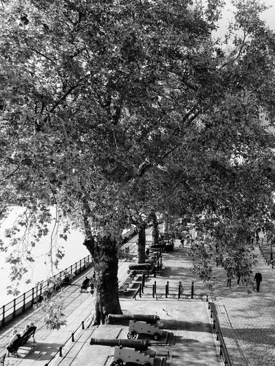Fall The City Light Tree London Outdoors United Kingdom Black And White Photography Thames Thames River Side Trees Welcome To Black The Great Outdoors - 2017 EyeEm Awards Tree Plant Day Nature High Angle View Growth Architecture City Road Street Mode Of Transportation Built Structure Incidental People The Way Forward Footpath Park City Footpath