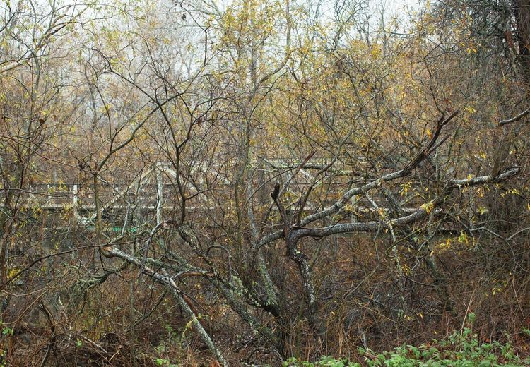 Through the trees Rainy Days Carmel Valley Yellow Leaves Bridge - Man Made Structure Tree Nature Bare Tree Outdoors No People Branch Forest Beauty In Nature