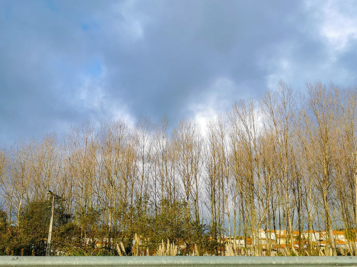 Panoramic shot of bare trees on land against sky