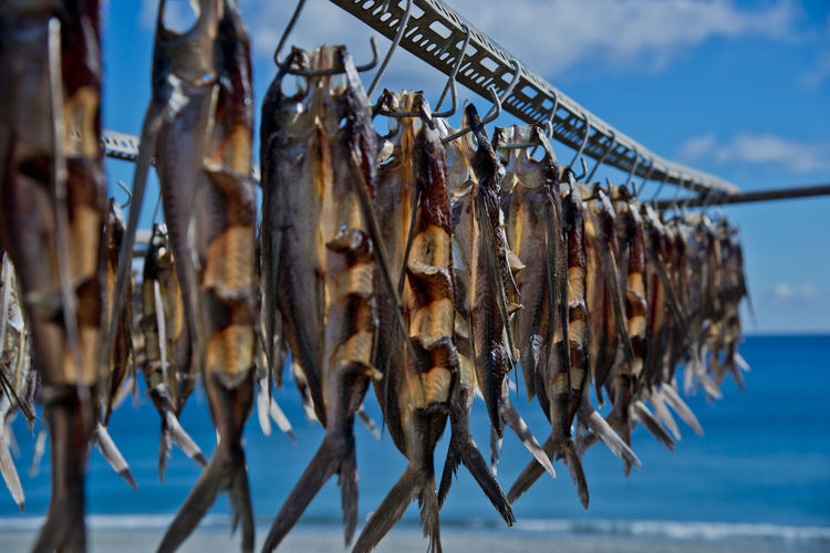Close-up of fish hanging on clothesline against sky