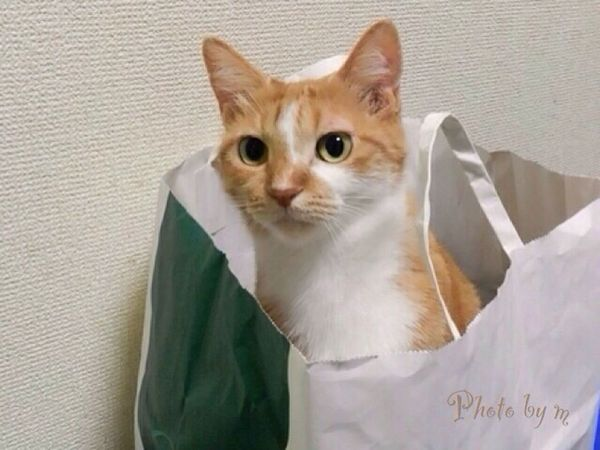 Cat Cat♡ Cat Lovers 猫 Mycat Animal ウチの姫様 茶トラ猫 Photography EyeEm Best Shots