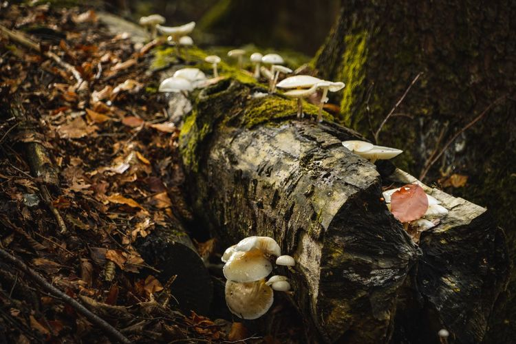 Forest wood Nature Photography Wood Mushroom Tree Fungus Close-up Nature No People Land Forest Plant Day Wood - Material Tree Trunk Toadstool