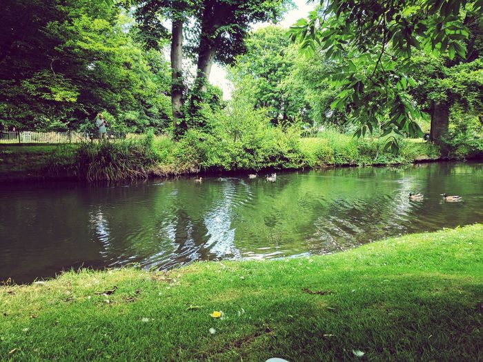 River Duck Hertford Water Nature Outdoors