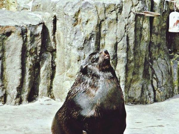 Feeling Thankful Hello World Animals Enjoying Life he's sooo cute)))