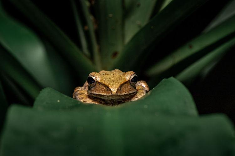 Close-up portrait of frog on leaf