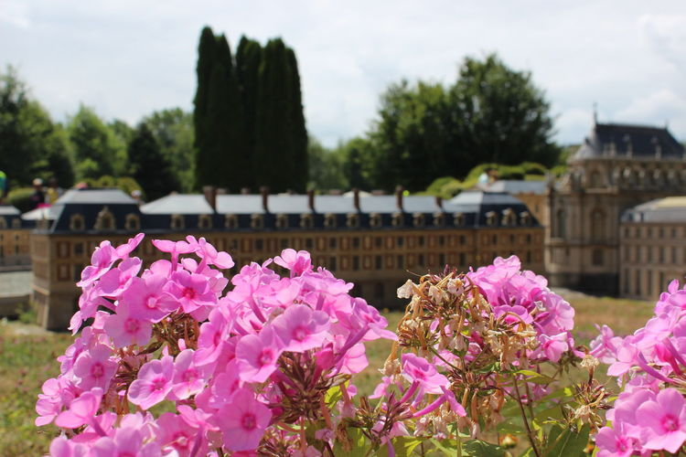 France Miniature France Miniature Flower Head Flower Tree Water Pink Color Springtime Sky Close-up Plant Cloud - Sky