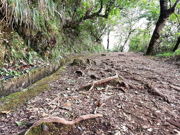 Nature Photography Nature_collection Plants Trees Perspective Water Channel Laurel Forest Levada Velha Levada Walk Roofs Hike Track Bildfolge Landscape_Collection Photography Landscape_photography Landscape Madeira Island Vacation Time Day No People Outdoors Nature Close-up