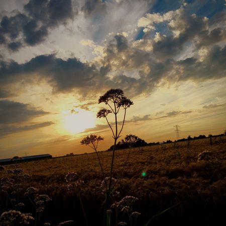 ' Come with me, where dreams are born, and time is never planned... - Peter Pan ' Nature Beauty In Nature Sky Field Growth No People Scenics Sunset Flower Cloud - Sky Plant Landscape Brabant Evening Netherlands Sun Iphone7 IPhone IPhoneography