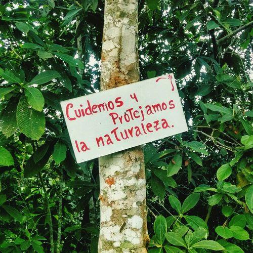 Cuidemos y protejamos la naturaleza Reflexiones Naturaleza Signs Frases