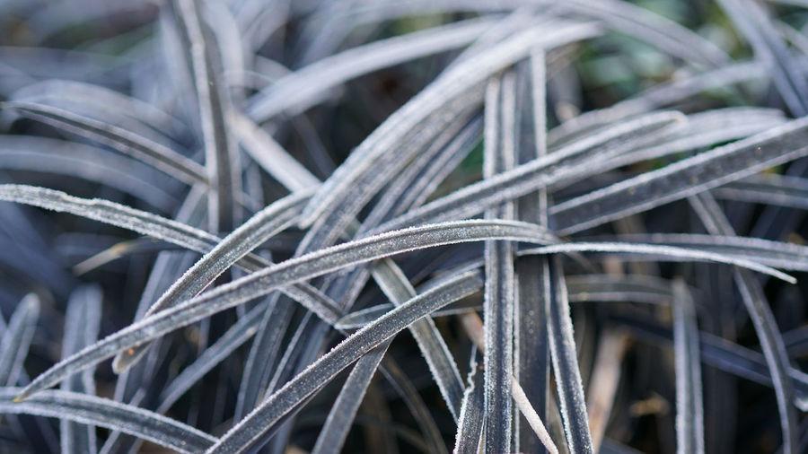 Full frame shot of frozen plants