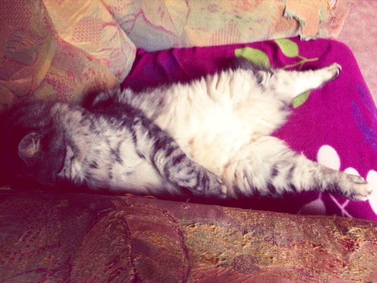 I Love My Cat ❤ Miau . RawRR !