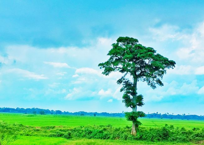 Solitude Landscape Tranquil Scene Tree Grass Tranquility Sky Scenics Green Color Blue Field Nature Green Beauty In Nature Solitude Countryside Grassy Non-urban Scene Outdoors Calm Remote Cloud - Sky Tree Day Single Tree
