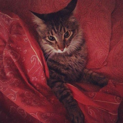 Проснулись! Fat Cat Соня котёнок усы хвост няшка krasnoyrsk