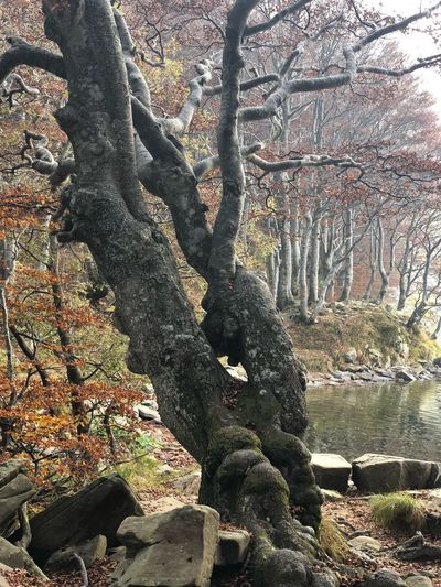 Fouillage Autumn Autumn colors Tree Plant Nature Sunlight Day Growth No People Land Beauty In Nature Trunk Forest Tree Trunk Tranquility Branch Shadow