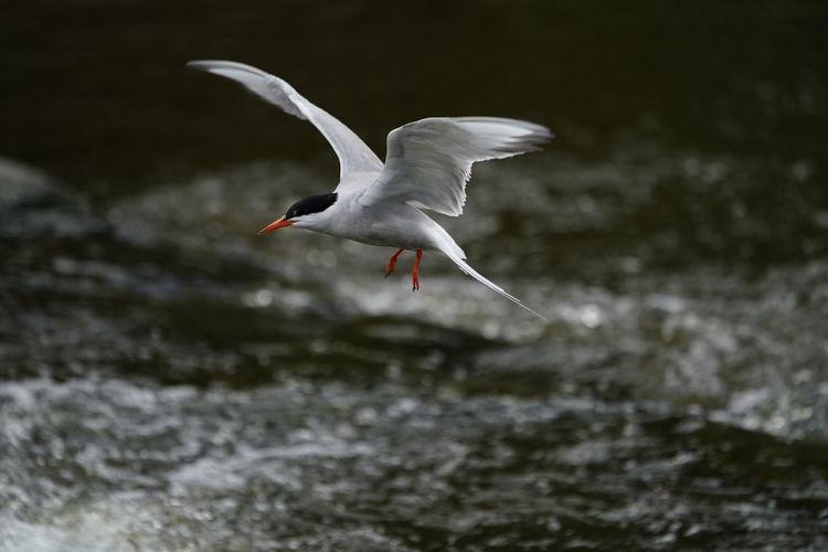 Bird flying over river