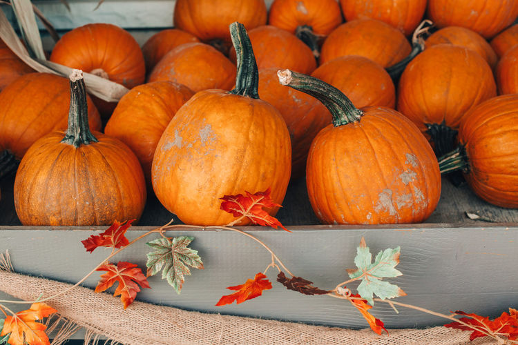 Thanksgiving and halloween holiday preparations. colorful pumpkins in baskets by store on farm.