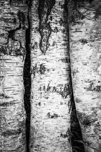 Bark Texture Bark Logs Backgrounds Full Frame Textured  Textile Pattern Close-up