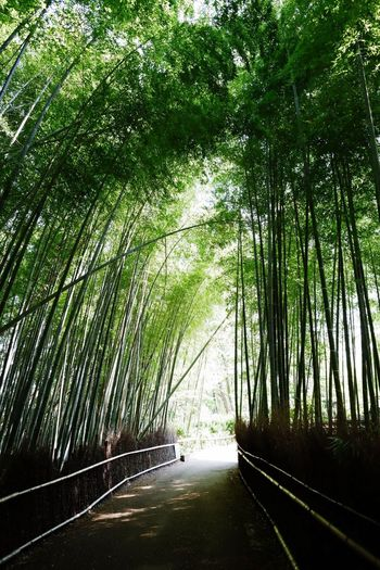 Tree Road The Way Forward Nature Green Color Forest Transportation Outdoors Day Growth No People Bamboo Grove Bamboo - Plant Scenics Branch Beauty In Nature