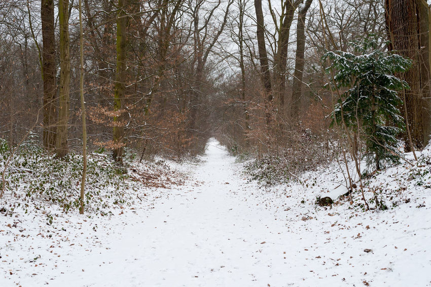 snow in the forest Tree Plant Snow Cold Temperature Forest Land No People The Way Forward Winter Nature Tranquility Non-urban Scene Direction Scenics - Nature Beauty In Nature Tranquil Scene Bare Tree Day Road Outdoors WoodLand Flowing Water Snowing
