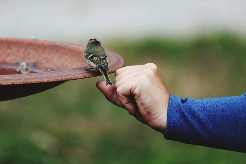 Cropped hand of man touching bird perching on metal