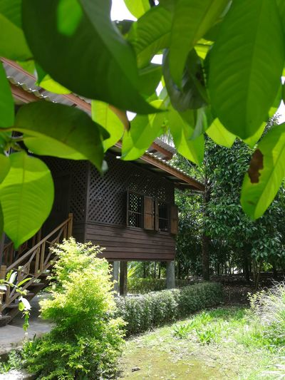 Homeandgarden Garden Tree Orchard Green Tropical Tropical Greenhouse Woodden House Tree Leaf Agriculture Architecture Built Structure Plant Green Color Building Exterior Hut Log Cabin Chalet Cottage Backyard Holiday Villa