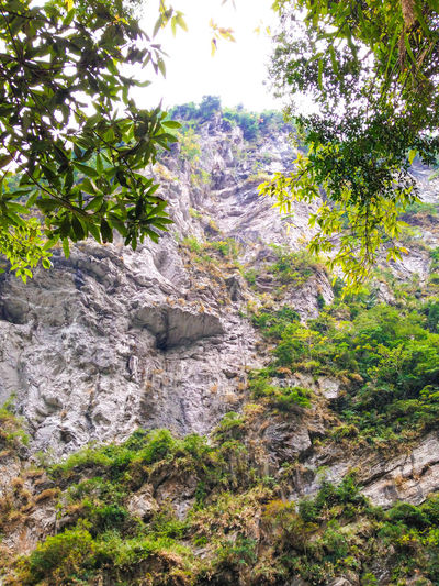 Hualien, Taiwan Mountain Rock Rock Formation Rocky Rocky Mountains Stone Trees