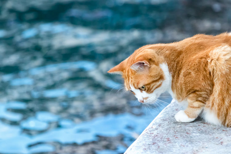 Animal Background Cat Eyes Feline Fishing Ginger Greece Hydra Kitten Looking Mammal Nature Orange Outdoor Outside Portrait Relax Sea Serious Face Sitting Street Walkway Watching Waterfront Young