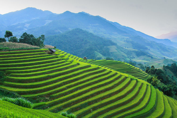 Rice fields on terraced in rainny season at Mu Cang Chai, Yen Bai, Vietnam. Rice fields prepare for transplant at Northwest Vietnam Mountain Scenics - Nature Landscape Agriculture Environment Beauty In Nature Rural Scene Mountain Range Field Farm Terraced Field Tranquil Scene Green Color Growth Land Nature Sky Rice Paddy Plant Rice - Cereal Plant No People Outdoors Plantation Mu Cang Chai-Yen Bai-Vietnam Vietnam Rice Field Northwest Vietnam