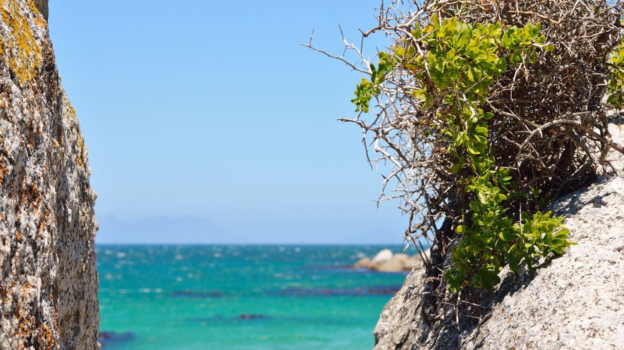Close-Up Of Tree By Sea Against Clear Blue Sky