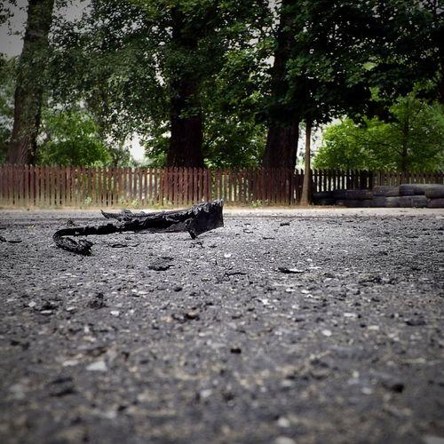 After a drift race Drift Muscle Cars Horsepower Popular Photos Rush Scud Tyres Burnt Eyeem Hungary EyeEm Best Edits