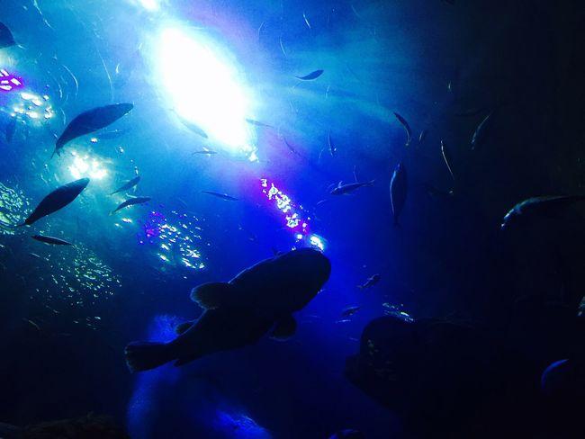 Taking Photos Aquarium Deep Sea Fish Light 아쿠아플라넷