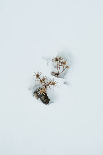 Snow covered plant on land against white background